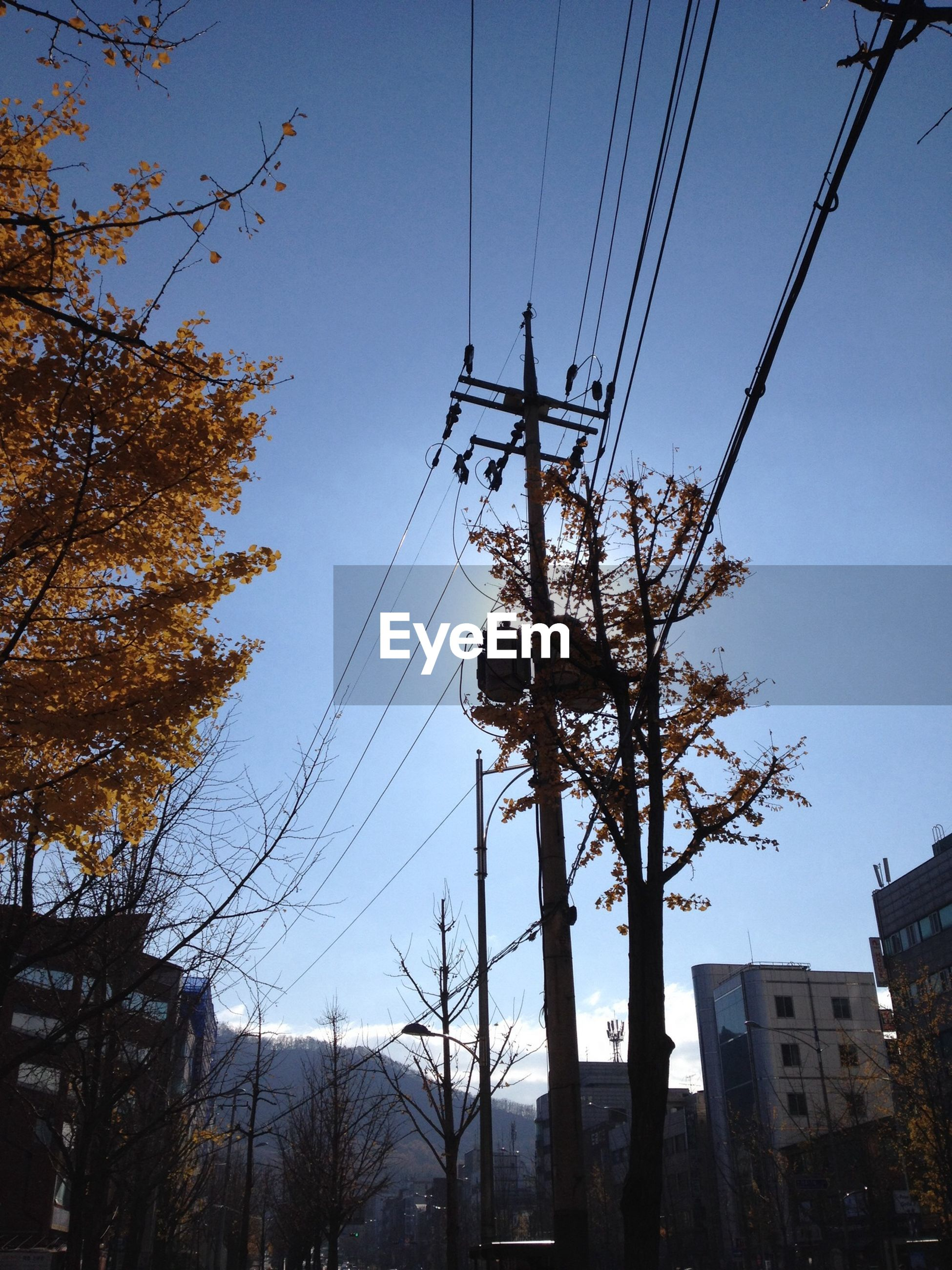 power line, electricity pylon, electricity, cable, power supply, tree, low angle view, connection, built structure, architecture, building exterior, clear sky, fuel and power generation, power cable, technology, sky, blue, outdoors, silhouette, no people