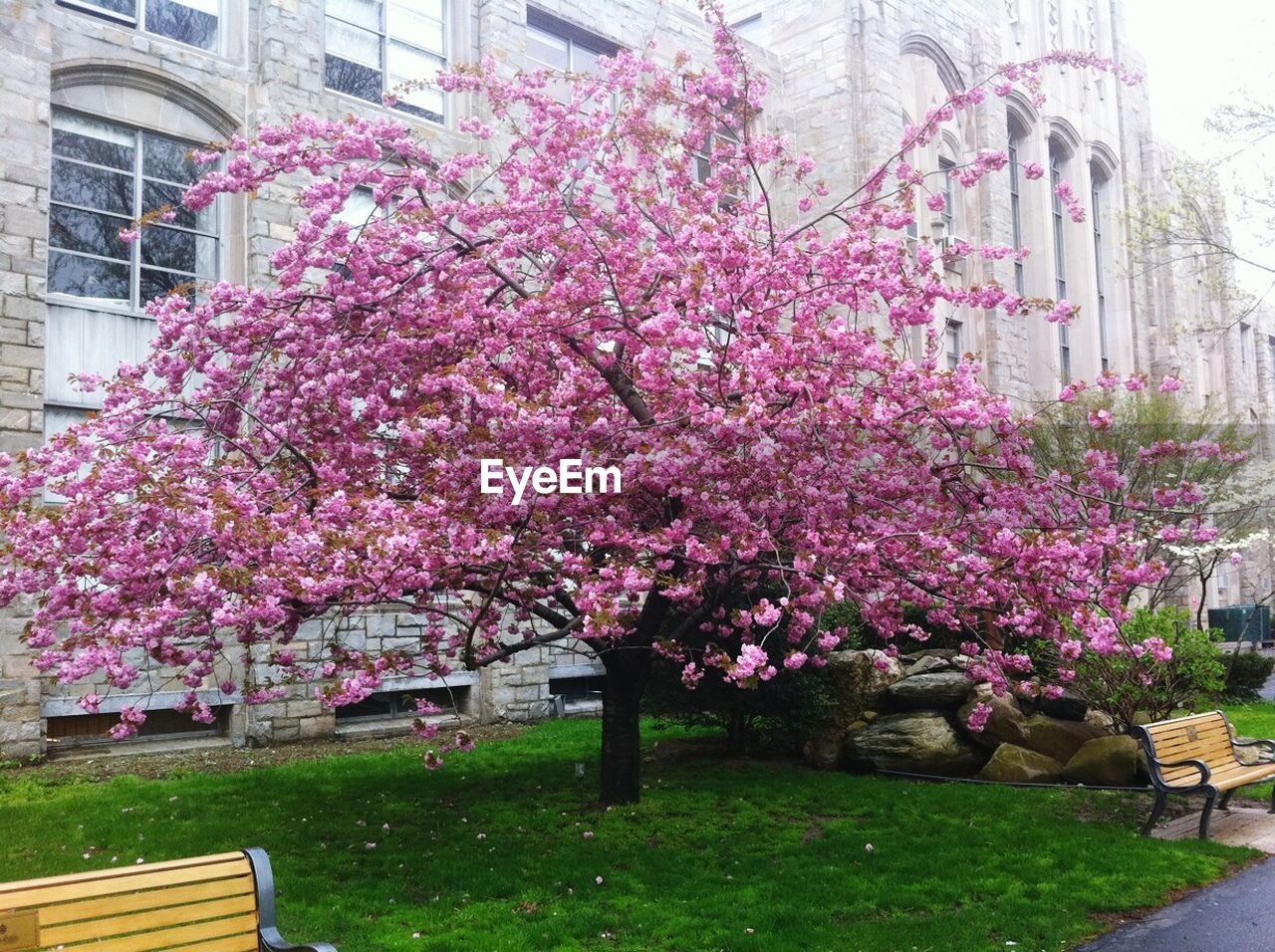 flower, blossom, pink color, growth, tree, no people, springtime, architecture, nature, pink, fragility, building exterior, beauty in nature, built structure, freshness, day, outdoors, branch, blooming