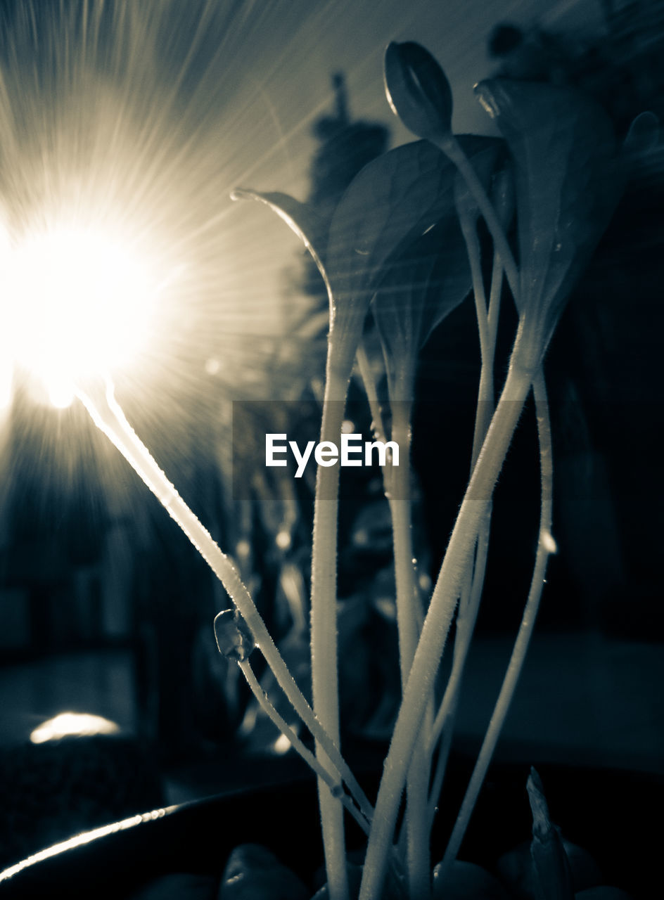plant, growth, no people, focus on foreground, close-up, nature, beauty in nature, outdoors, night, selective focus, sky, freshness, lens flare, fragility, plant part, flower