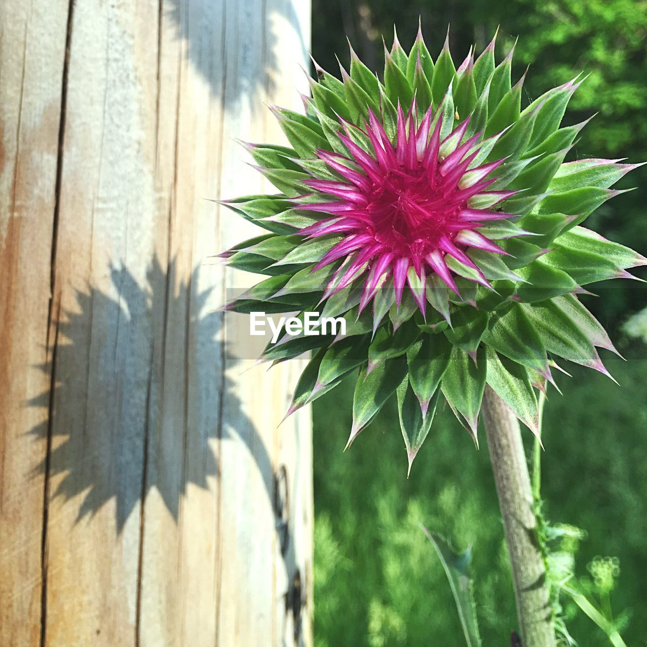 flower, nature, growth, day, cactus, no people, beauty in nature, outdoors, close-up, plant, fragility, focus on foreground, flower head, freshness, tree