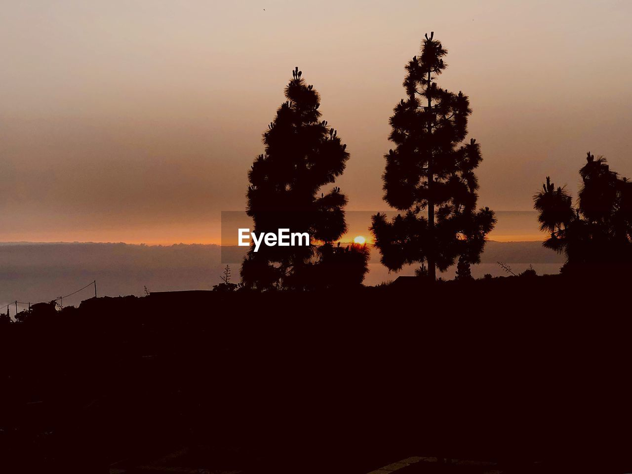 sunset, tree, silhouette, sky, plant, beauty in nature, scenics - nature, nature, tranquility, tranquil scene, no people, orange color, non-urban scene, growth, idyllic, landscape, field, copy space, land, outdoors