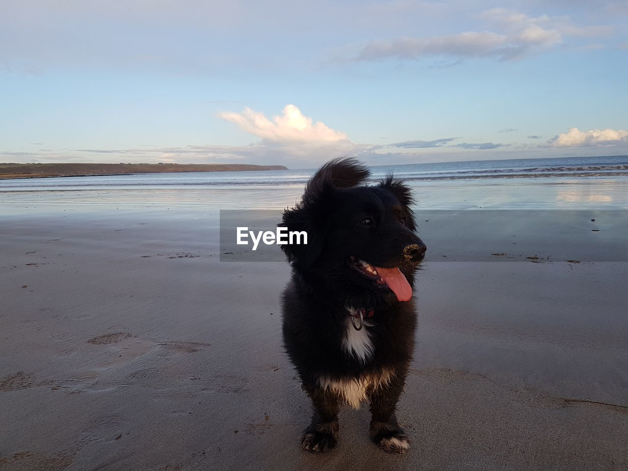 dog, beach, one animal, sea, pets, sand, sky, domestic animals, animal themes, nature, water, mammal, black color, outdoors, horizon over water, day, no people, beauty in nature, scenics