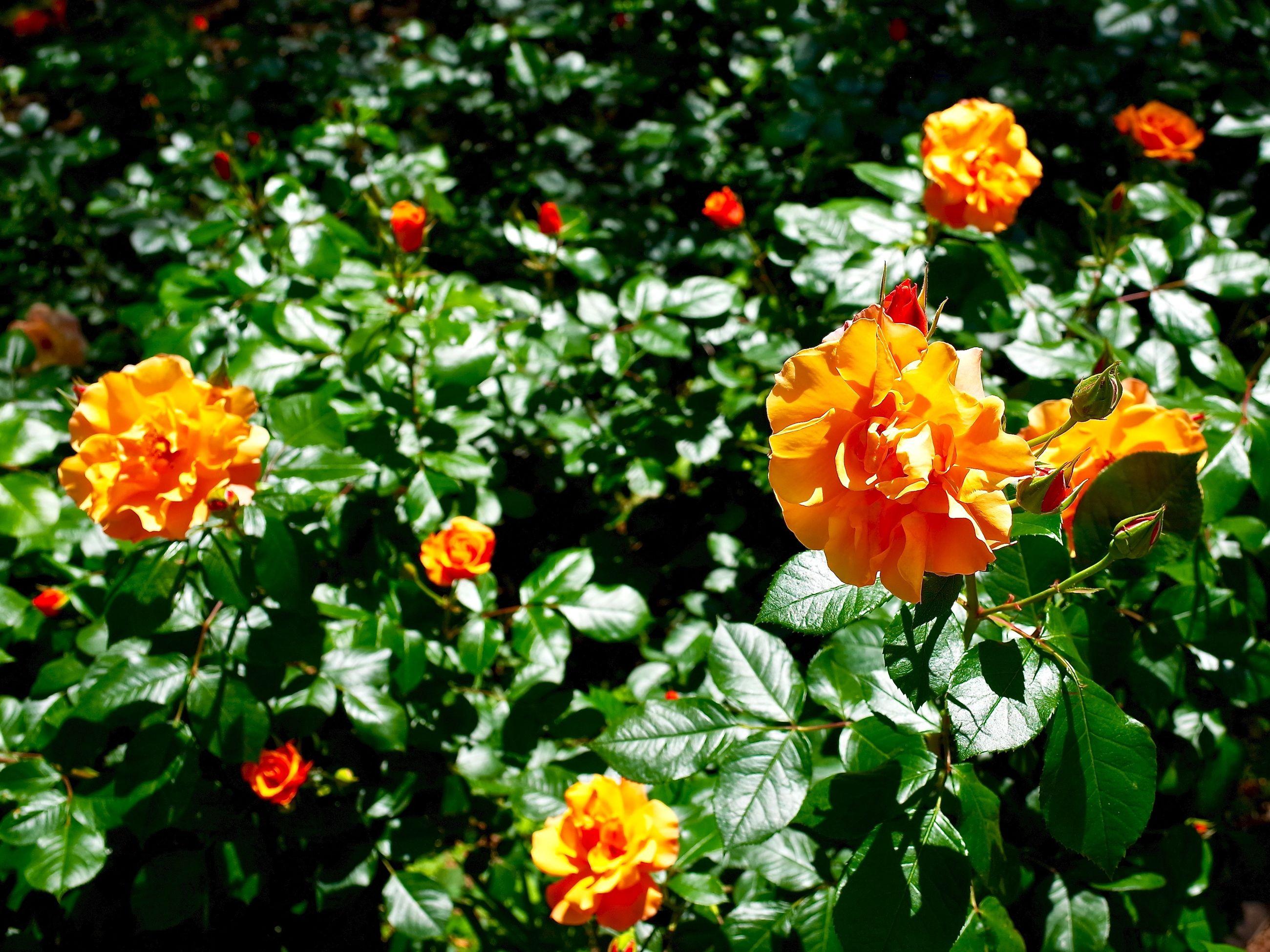 Orange flowers blooming in park