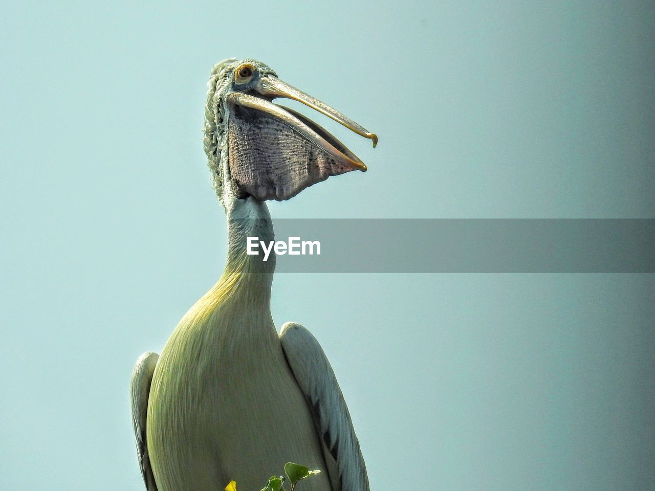 bird, animals in the wild, vertebrate, animal themes, one animal, animal wildlife, sky, animal, beak, clear sky, no people, copy space, nature, day, low angle view, close-up, outdoors, blue, perching, looking, animal head, animal neck