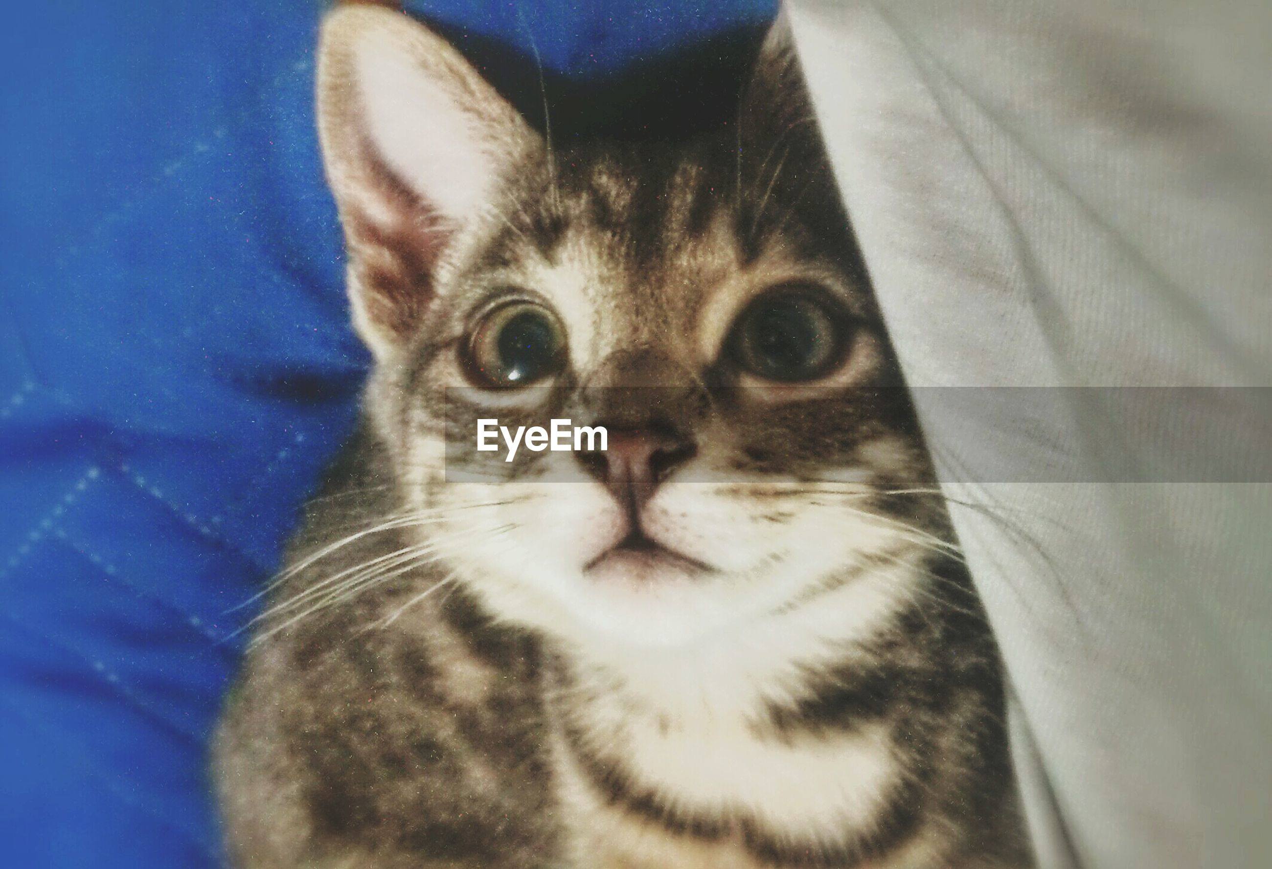 pets, animal themes, one animal, domestic animals, domestic cat, cat, indoors, mammal, feline, whisker, portrait, looking at camera, close-up, animal head, animal eye, relaxation, animal body part, staring, alertness, zoology