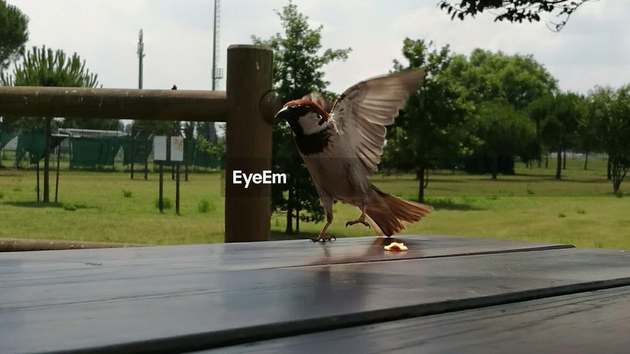 View of bird on floorboard