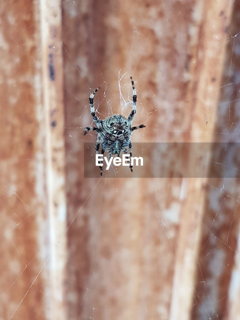 spider, one animal, spider web, animal themes, animals in the wild, insect, close-up, animal wildlife, web, day, selective focus, outdoors, no people, nature, animal leg, fragility