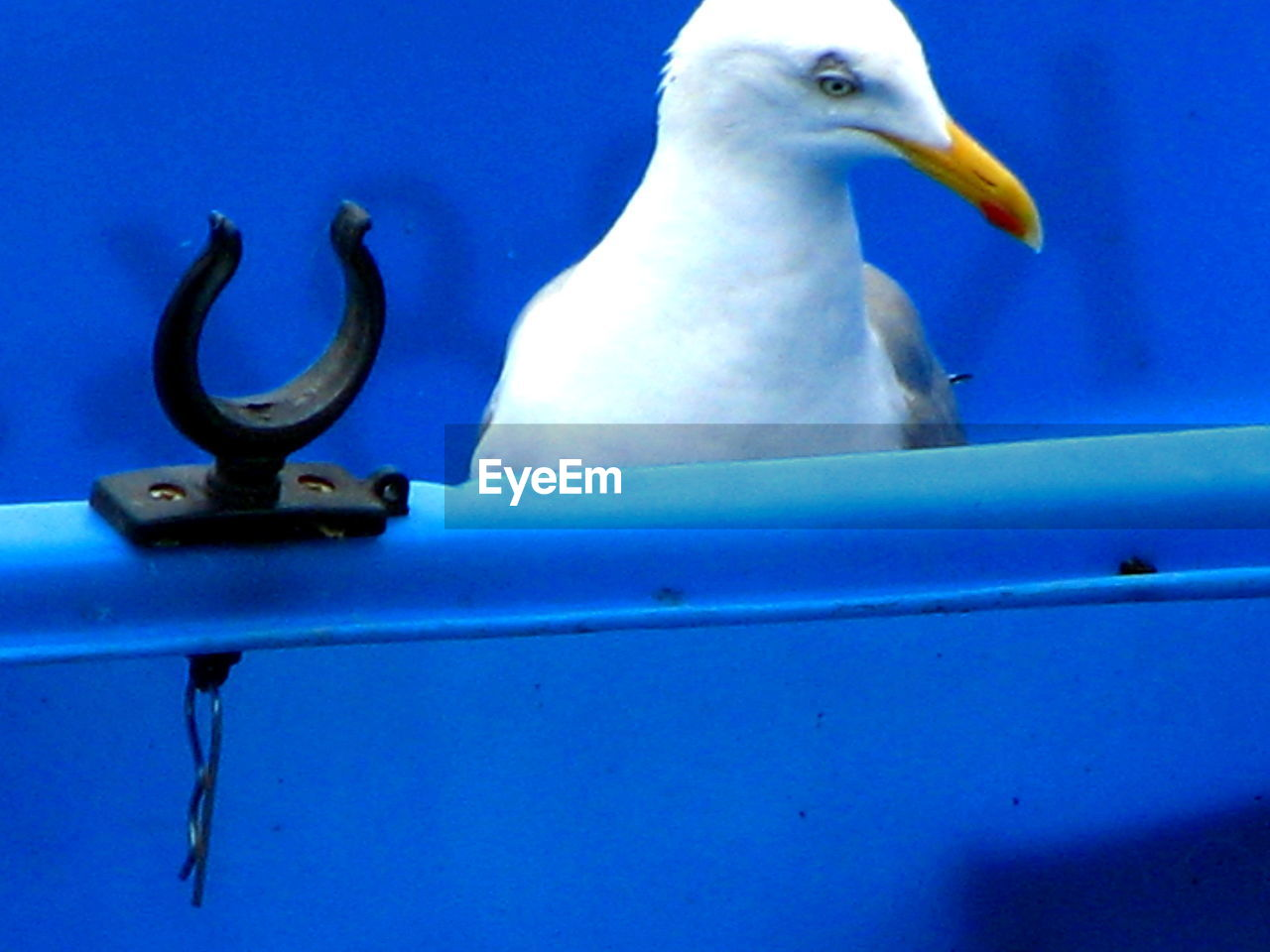 animal themes, animals in the wild, bird, perching, one animal, animal wildlife, white color, no people, blue, day, outdoors, close-up, nature