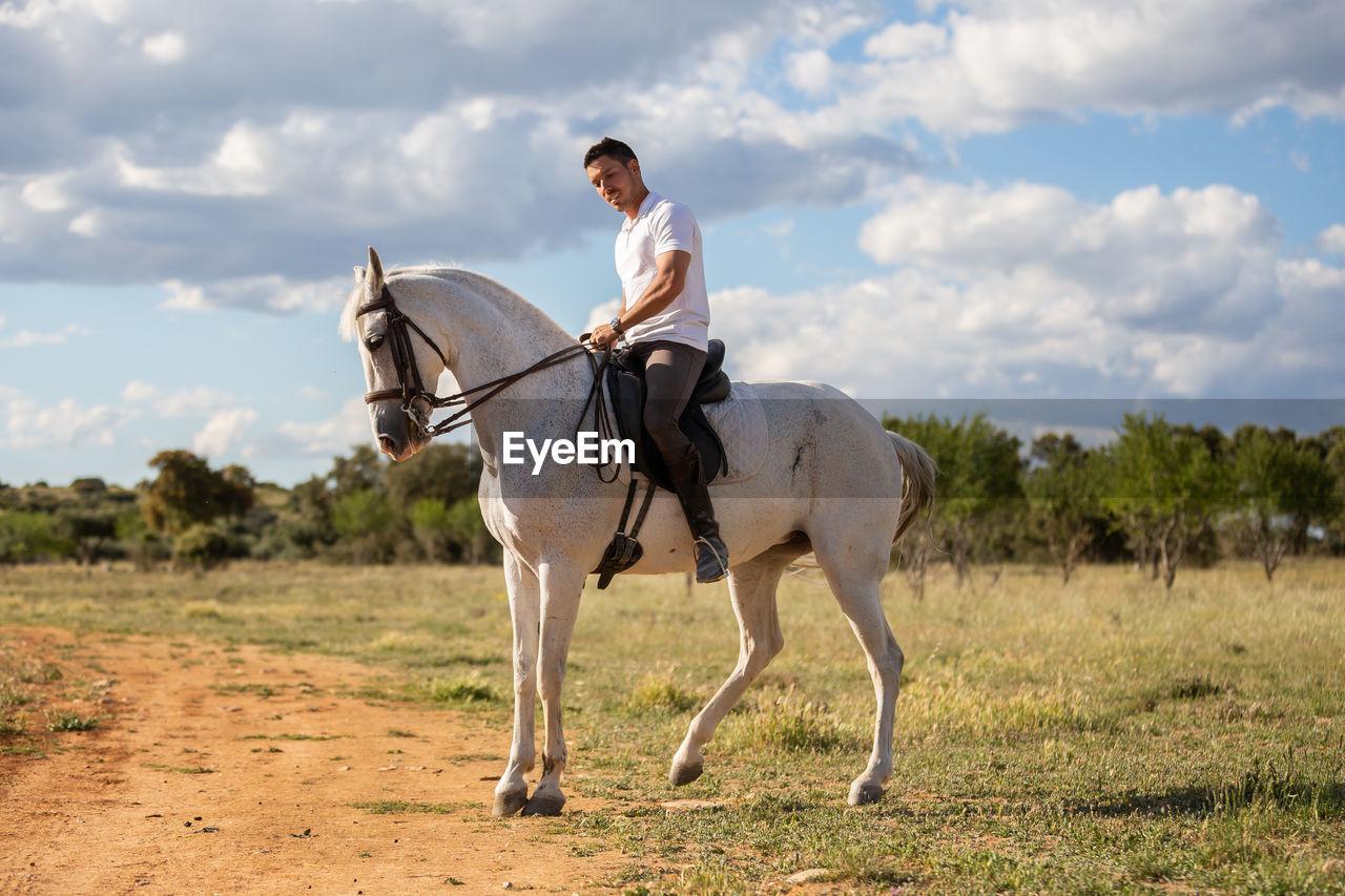 HORSE RIDING HORSES