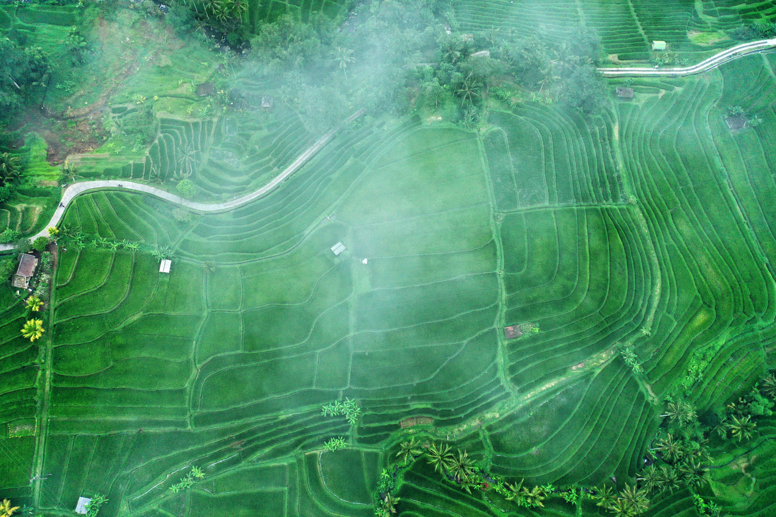 Aerial view of agricultural landscape in foggy weather