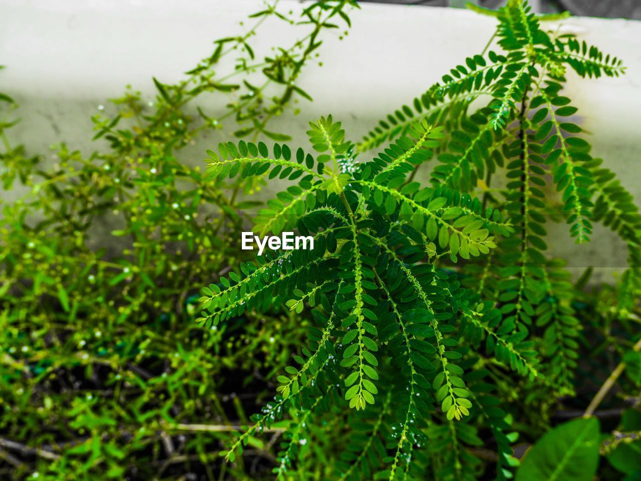 green color, plant, growth, leaf, plant part, beauty in nature, nature, close-up, day, no people, focus on foreground, selective focus, outdoors, freshness, tranquility, tree, fern, high angle view, fragility, vulnerability, leaves