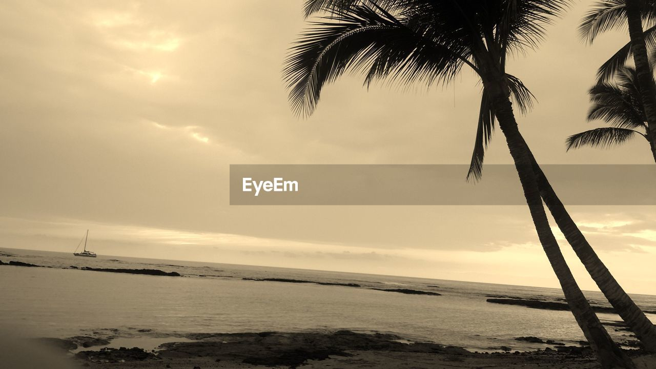 palm tree, sea, beauty in nature, water, scenics, sky, nature, tree, tranquility, tranquil scene, beach, sunset, horizon over water, outdoors, idyllic, no people, sun, palm frond, cloud - sky, tree trunk, silhouette, growth, day