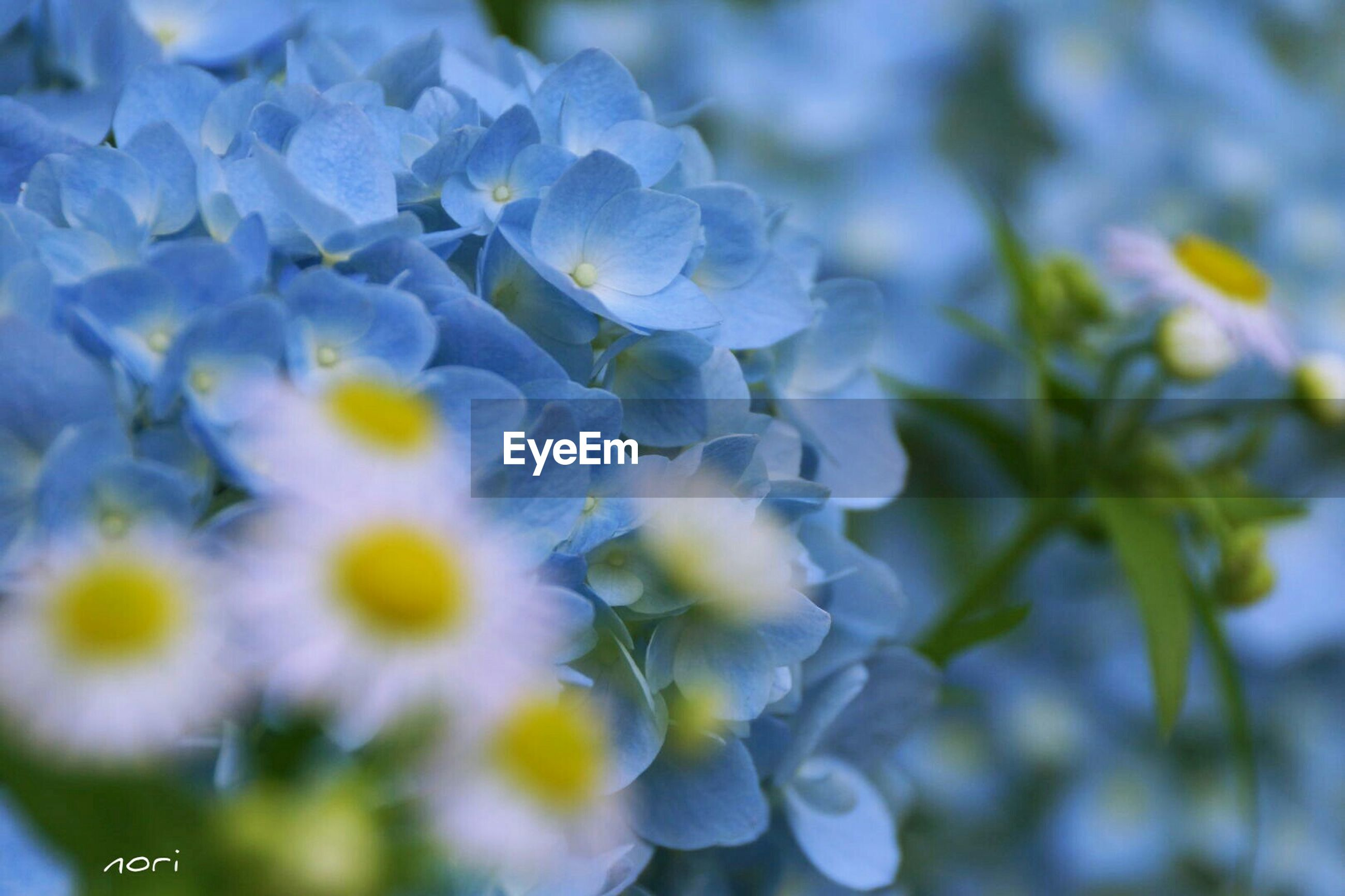flower, freshness, fragility, petal, growth, flower head, beauty in nature, close-up, focus on foreground, nature, blooming, plant, selective focus, purple, in bloom, white color, day, botany, blue, blossom