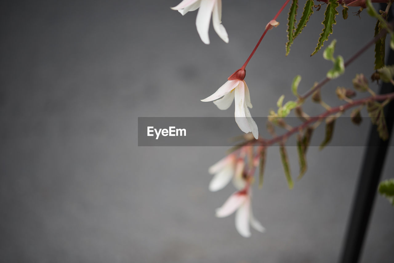 plant, flower, beauty in nature, fragility, flowering plant, vulnerability, close-up, growth, freshness, petal, white color, nature, focus on foreground, no people, inflorescence, flower head, selective focus, day, blossom, outdoors, springtime, pollen, cherry blossom