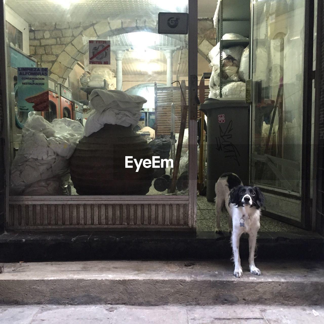 Dog outside laundromat