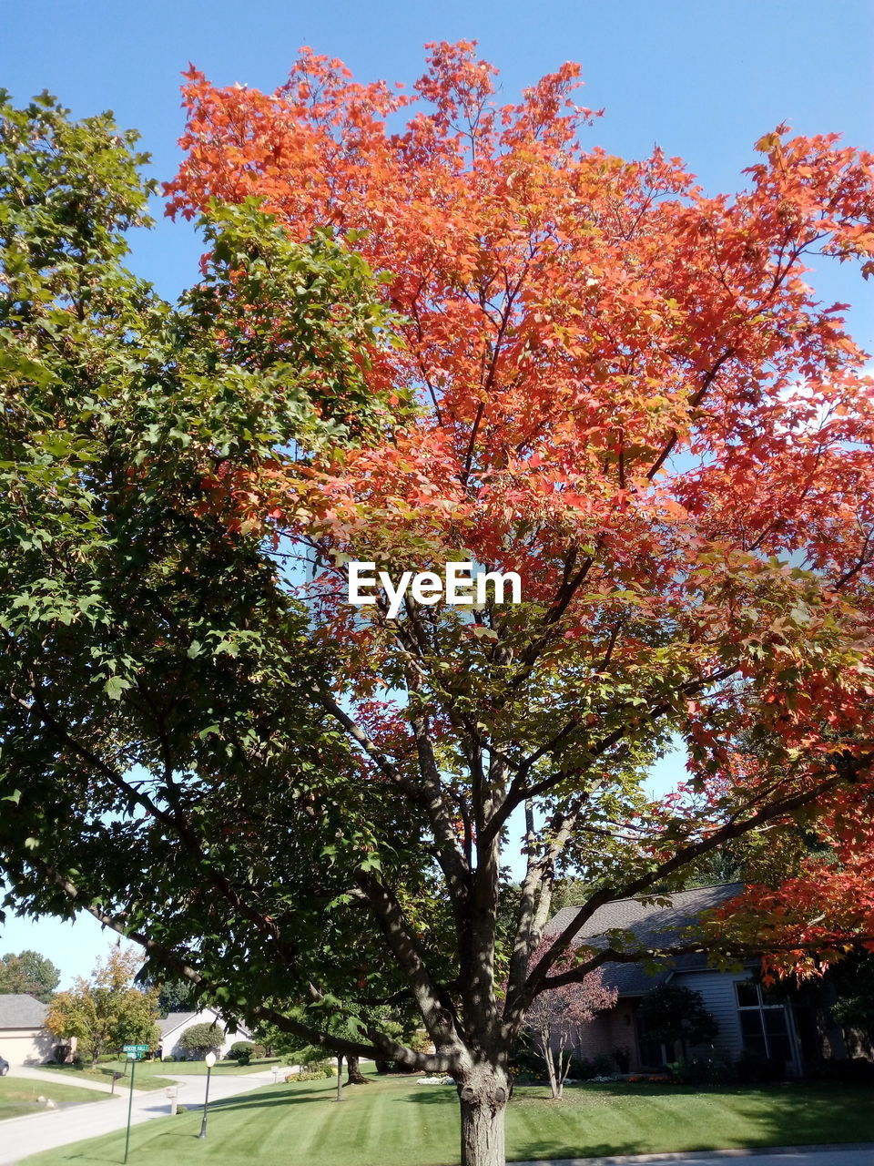 tree, autumn, nature, growth, change, beauty in nature, day, no people, outdoors, tranquility, low angle view, branch, leaf, sky, close-up