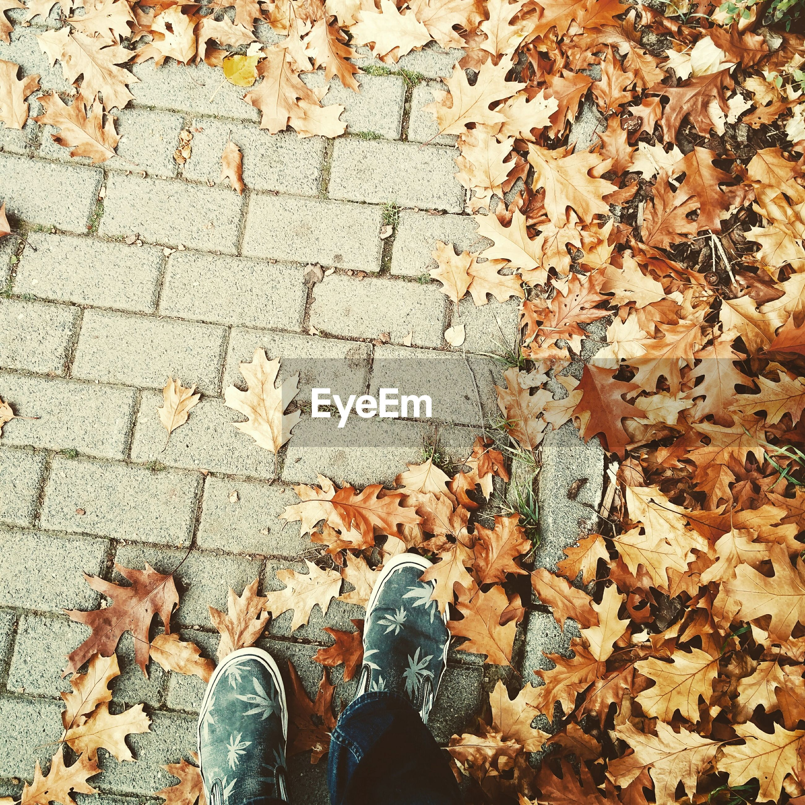 Low section of person standing by autumn leaves on footpath