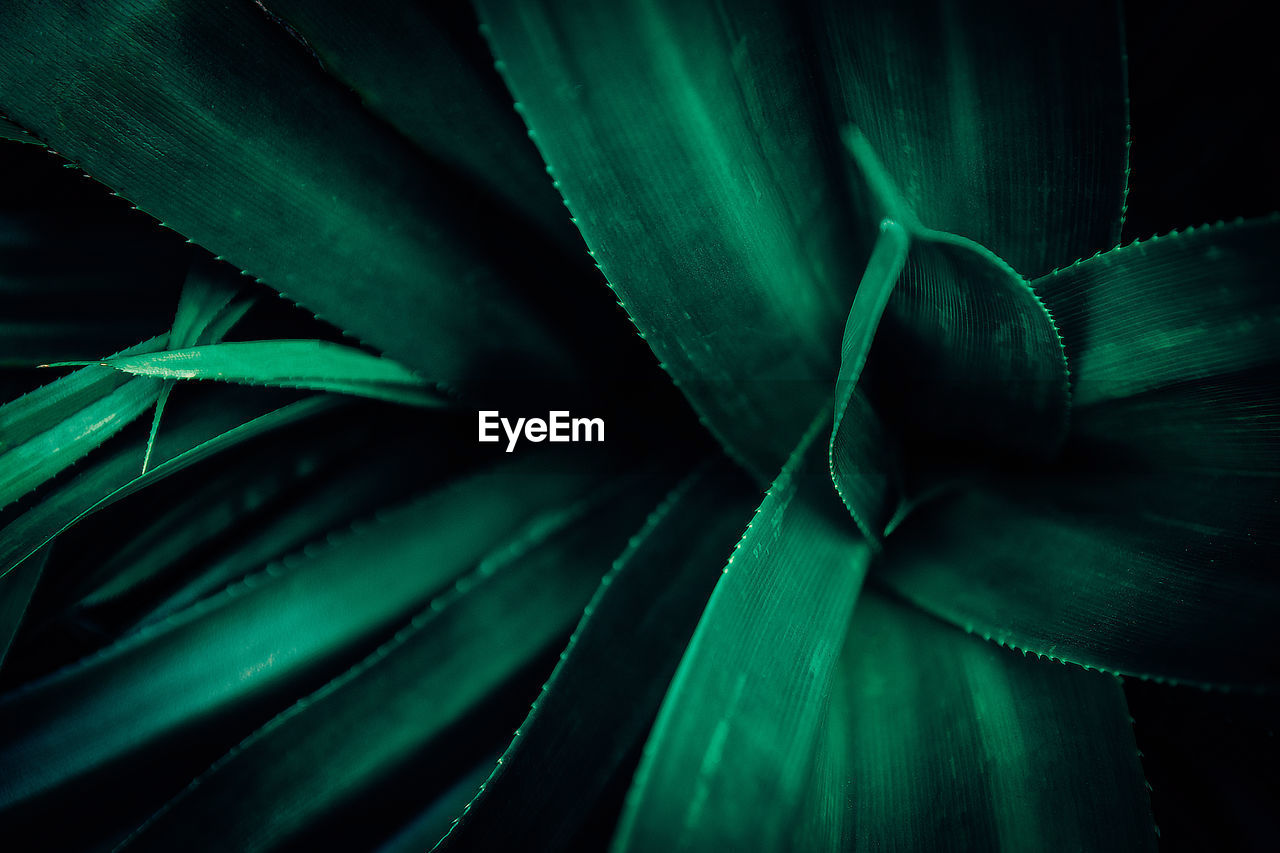 growth, green color, leaf, plant part, close-up, plant, backgrounds, no people, full frame, succulent plant, beauty in nature, nature, aloe vera plant, natural pattern, day, thorn, selective focus, pattern, cactus, freshness, leaves, spiky