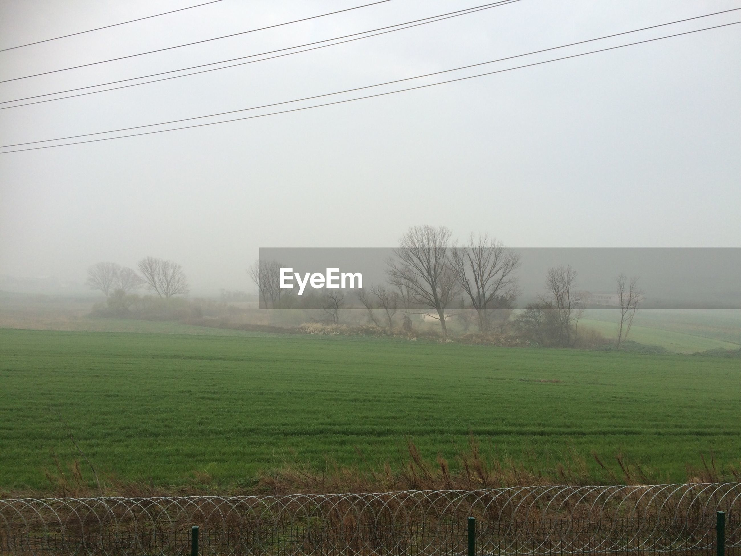 field, landscape, grass, fog, tranquility, tranquil scene, rural scene, tree, nature, power line, grassy, electricity pylon, fence, foggy, scenics, beauty in nature, agriculture, weather, sky