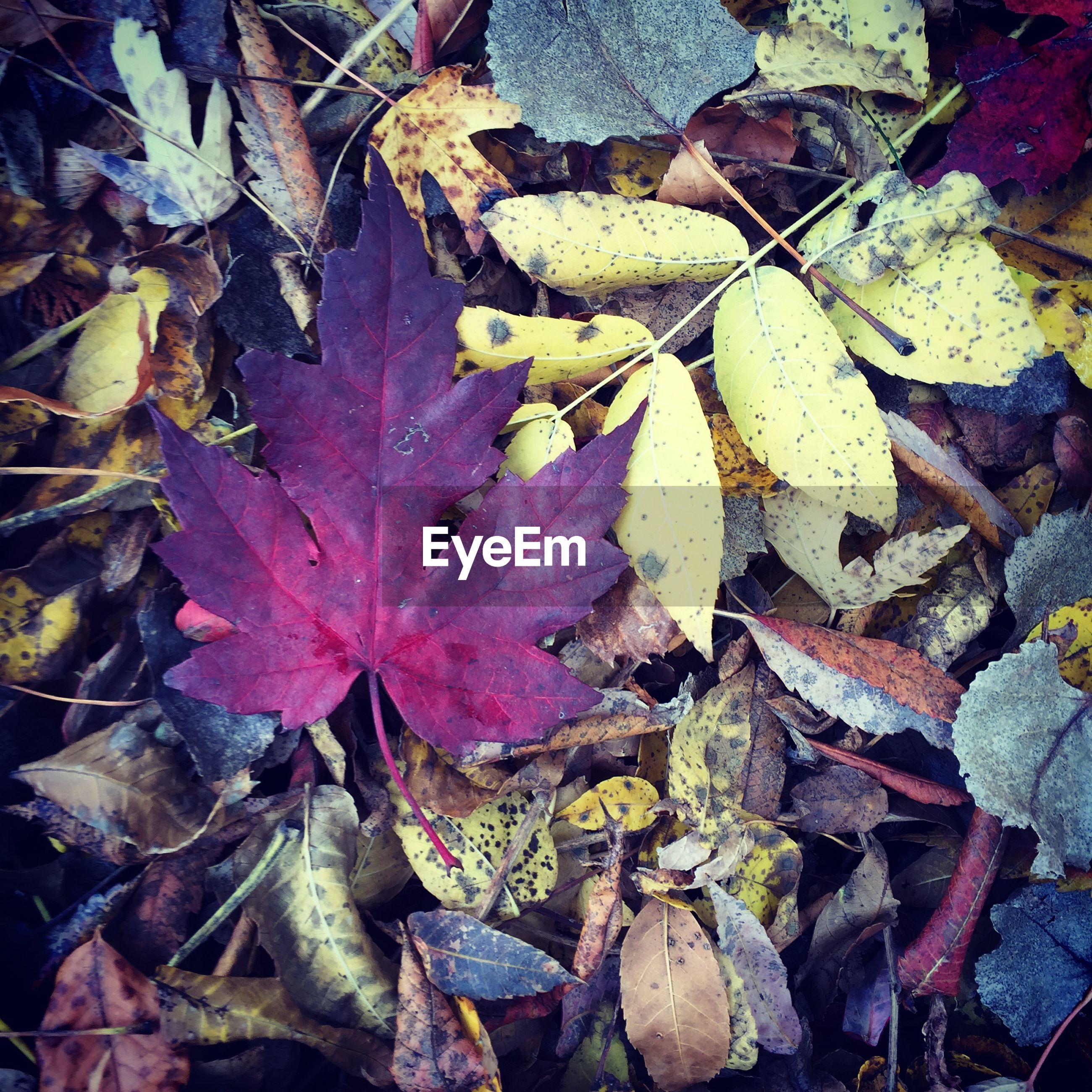 Full frame shot of leaves during autumn