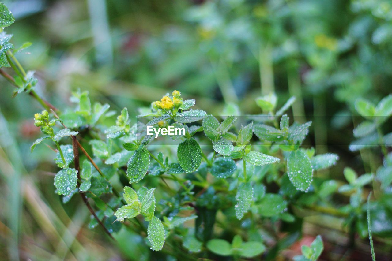 plant, growth, green color, beauty in nature, freshness, leaf, close-up, plant part, nature, flower, day, flowering plant, selective focus, no people, focus on foreground, vulnerability, fragility, outdoors, drop, flower head, dew