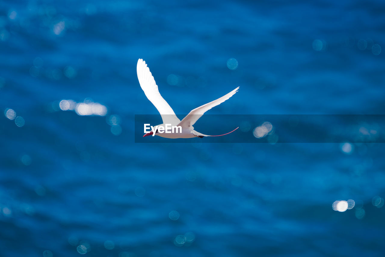 SEAGULL FLYING IN SEA