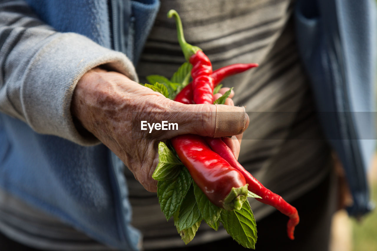 Midsection Of Person Holding Red Chili Peppers And Mint Leaves