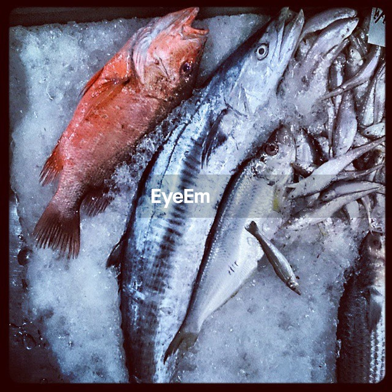 fish, seafood, food and drink, freshness, raw food, food, healthy eating, cold temperature, no people, ice, fish market, frozen, indoors, day, close-up