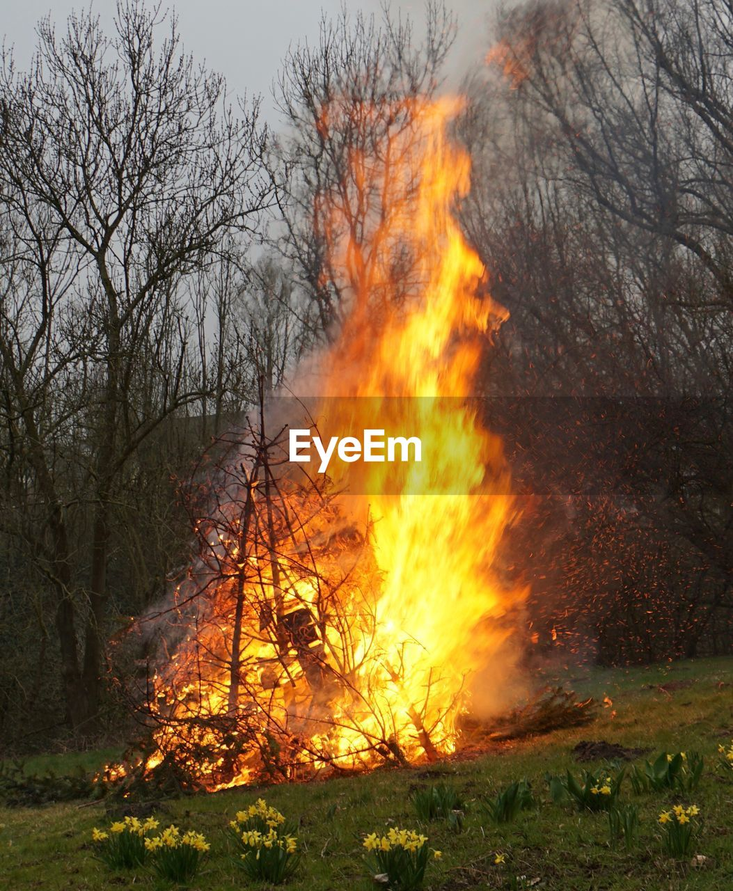 burning, fire, fire - natural phenomenon, flame, heat - temperature, tree, land, forest, nature, environmental issues, orange color, plant, forest fire, smoke - physical structure, environmental damage, environment, sign, bare tree, no people, warning sign, outdoors, woodland, pollution, air pollution