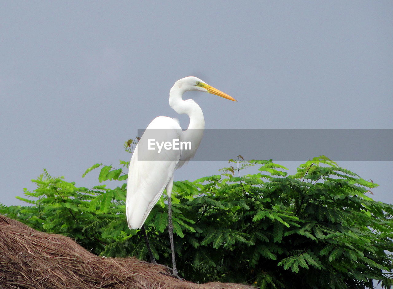 High Angle View Of Bird On Tree