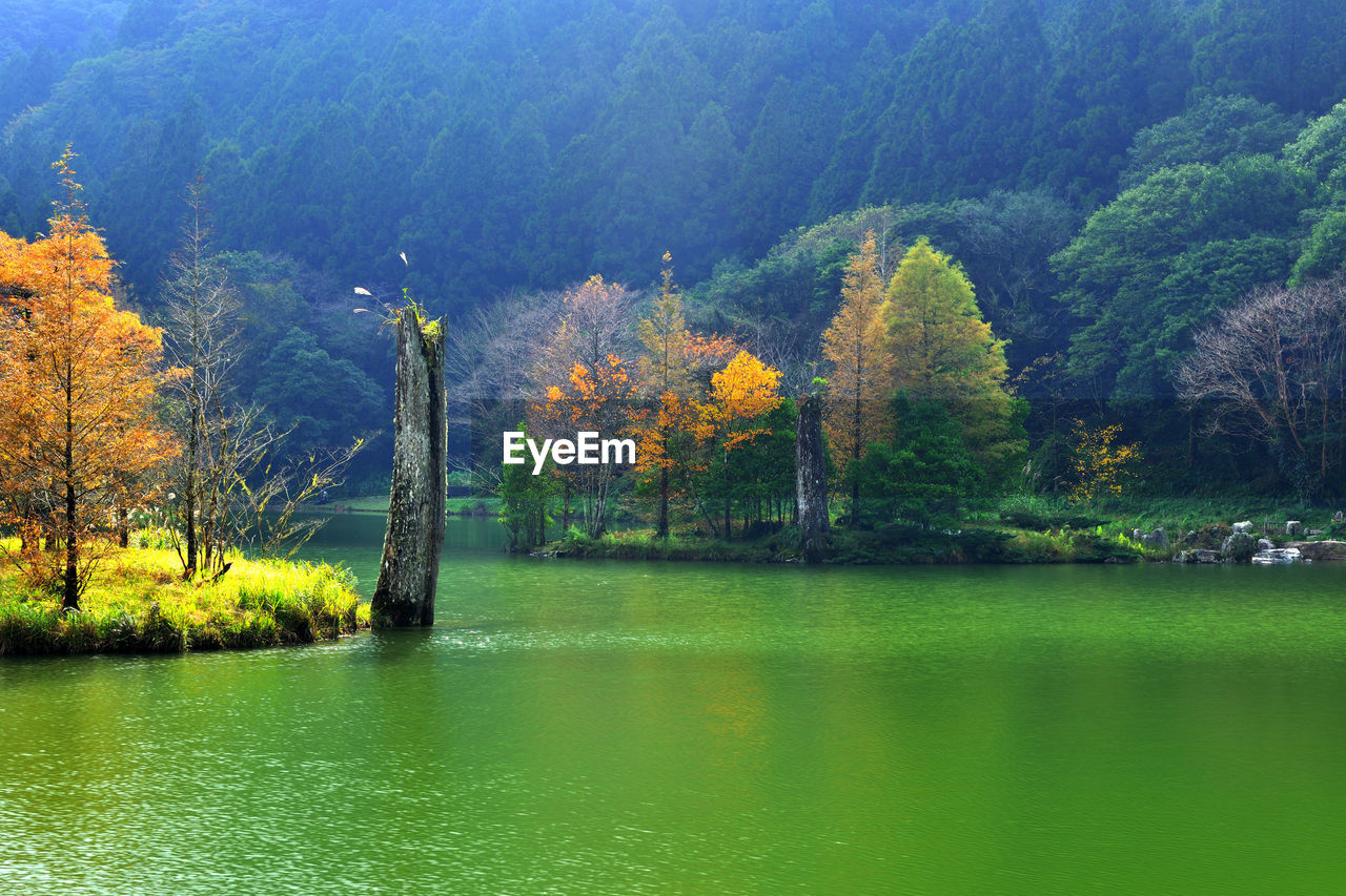tree, nature, beauty in nature, tranquility, tranquil scene, scenics, water, lake, green color, no people, outdoors, growth, day, forest, idyllic, autumn, waterfront, landscape, mountain, grass, sky