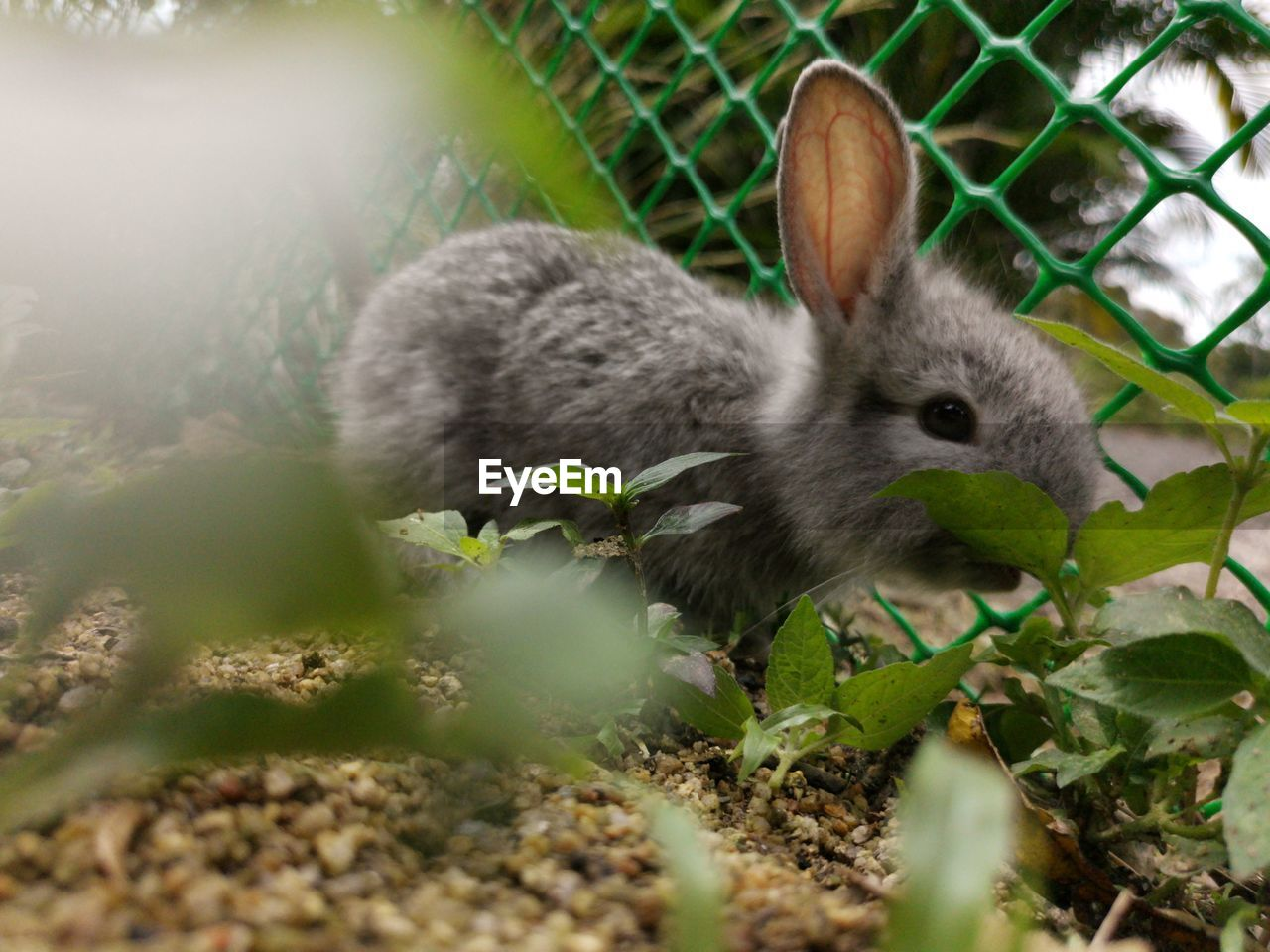 animal themes, animal, one animal, vertebrate, animal wildlife, mammal, nature, animals in the wild, no people, plant, leaf, plant part, selective focus, day, land, rabbit, close-up, rabbit - animal, field, young animal, outdoors, herbivorous, whisker