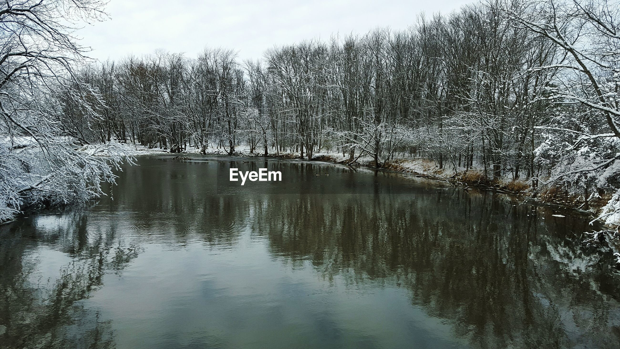 River amidst frozen trees during winter