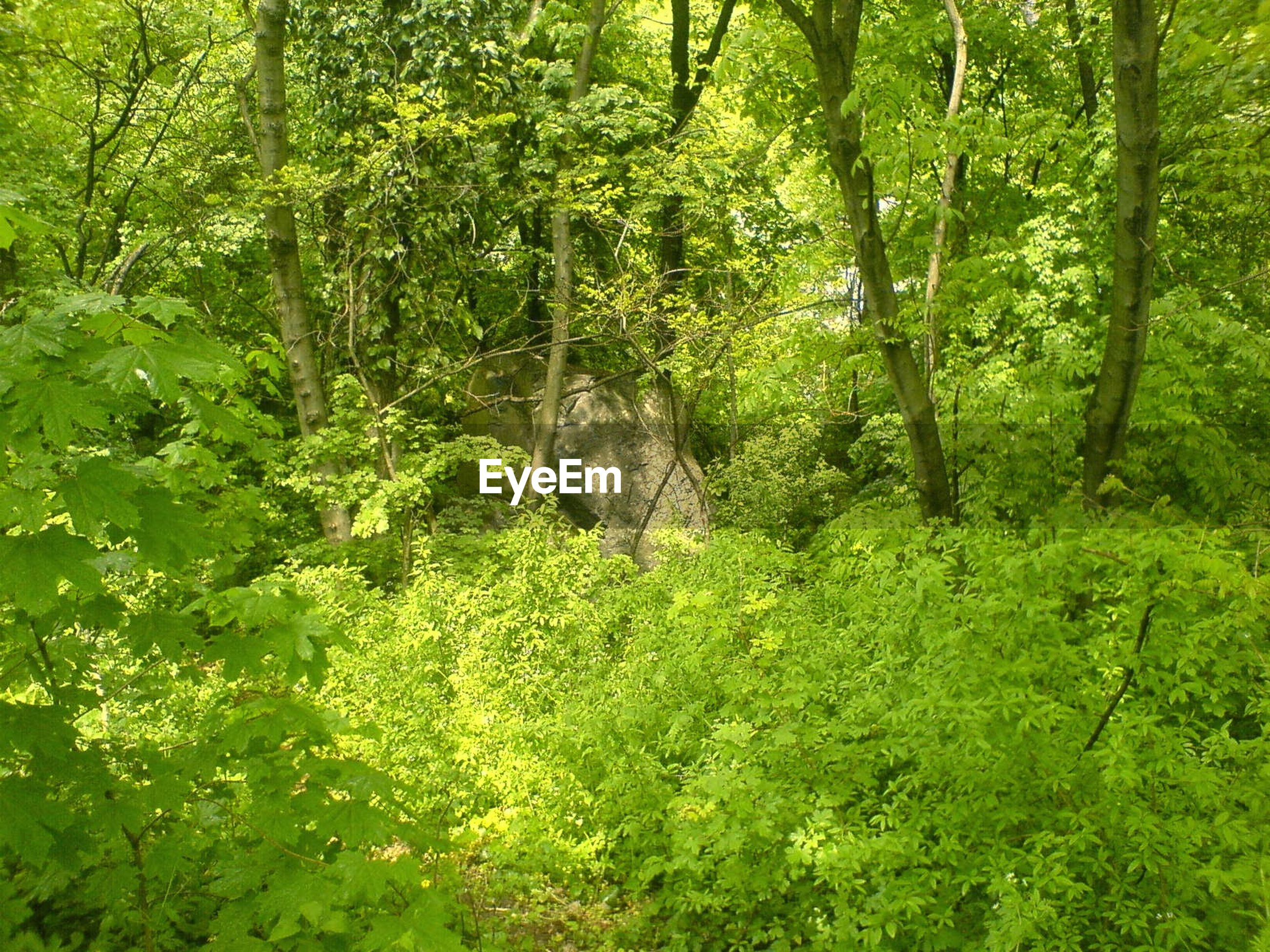 VIEW OF TREES IN FOREST