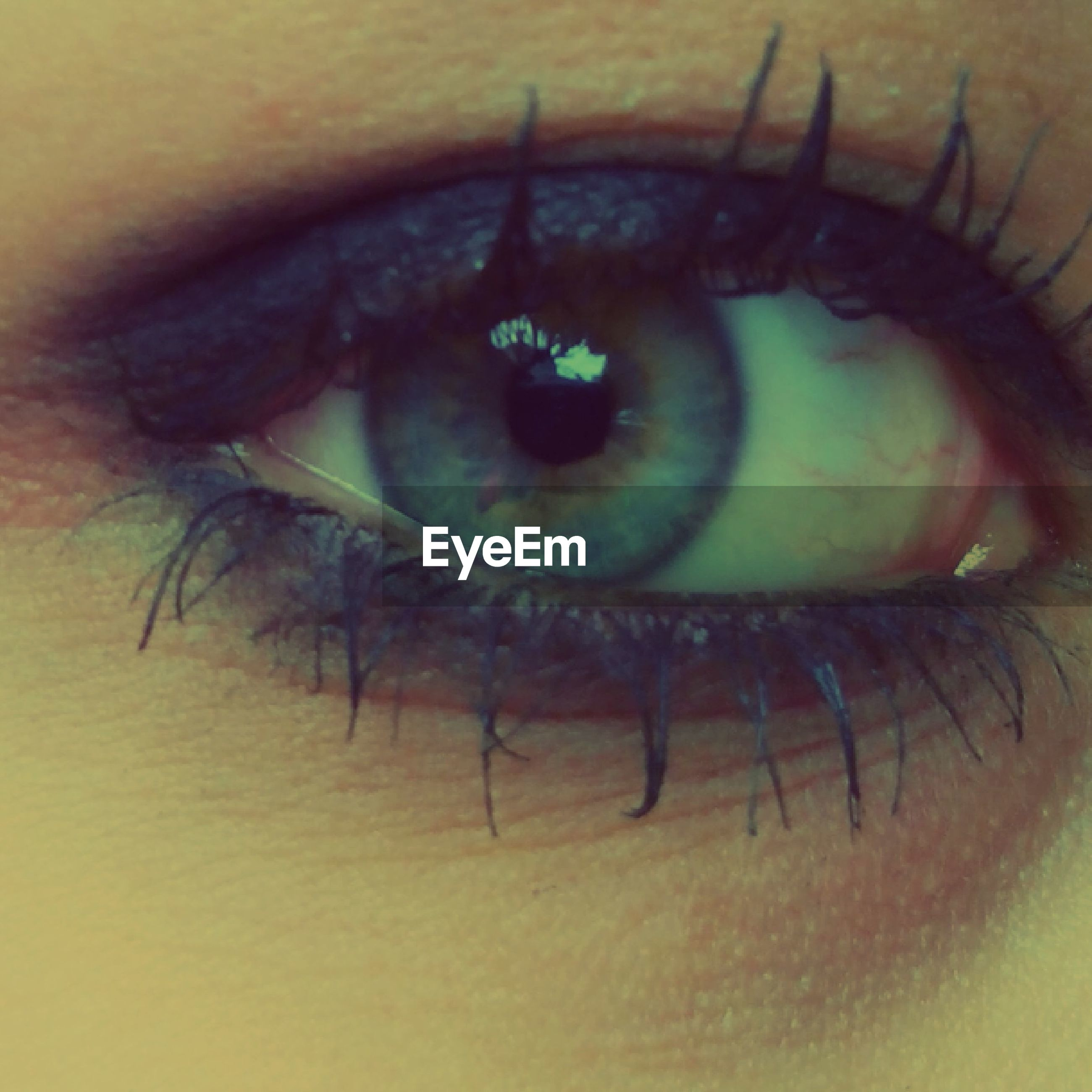 human eye, close-up, eyelash, eyesight, part of, looking at camera, portrait, sensory perception, indoors, unrecognizable person, extreme close-up, lifestyles, eyeball, human skin, person, cropped, one animal