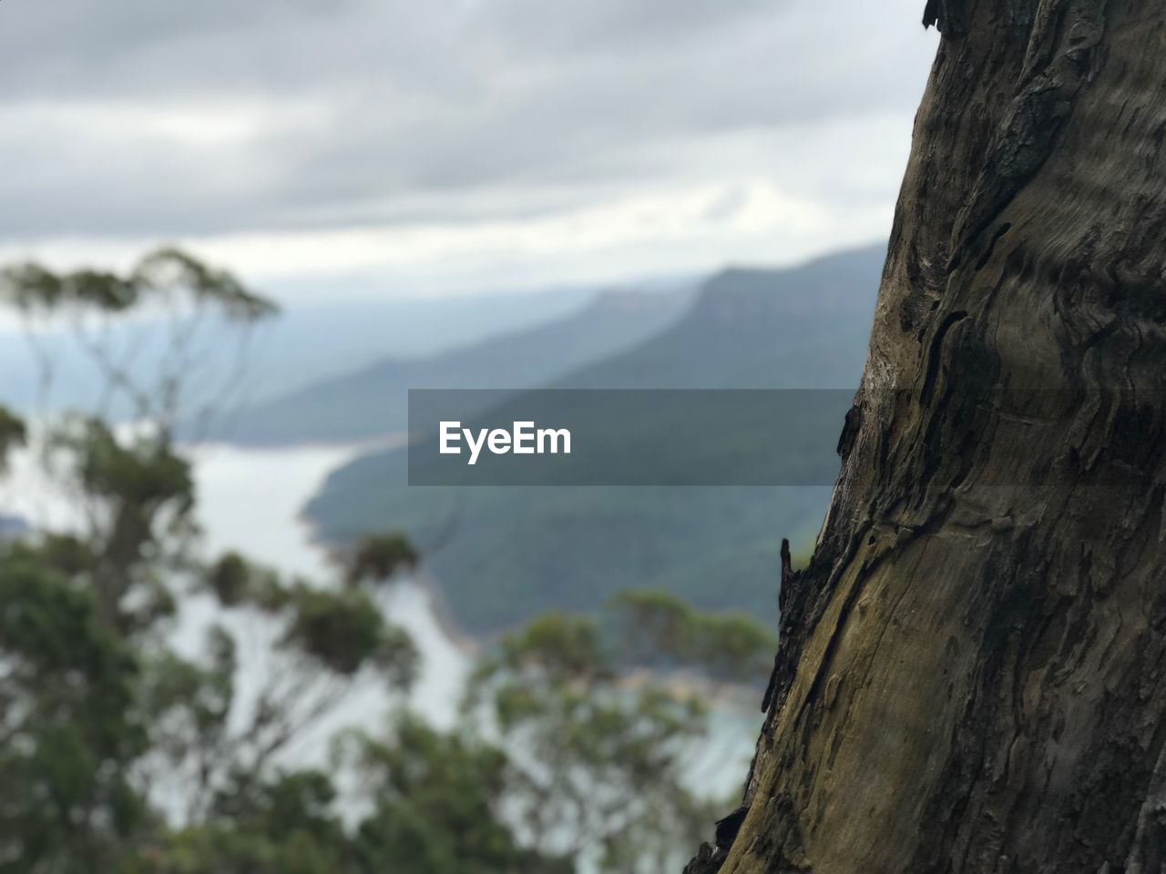 tree, mountain, tree trunk, beauty in nature, plant, sky, cloud - sky, nature, trunk, day, focus on foreground, no people, tranquility, scenics - nature, outdoors, tranquil scene, mountain range, water, environment, close-up