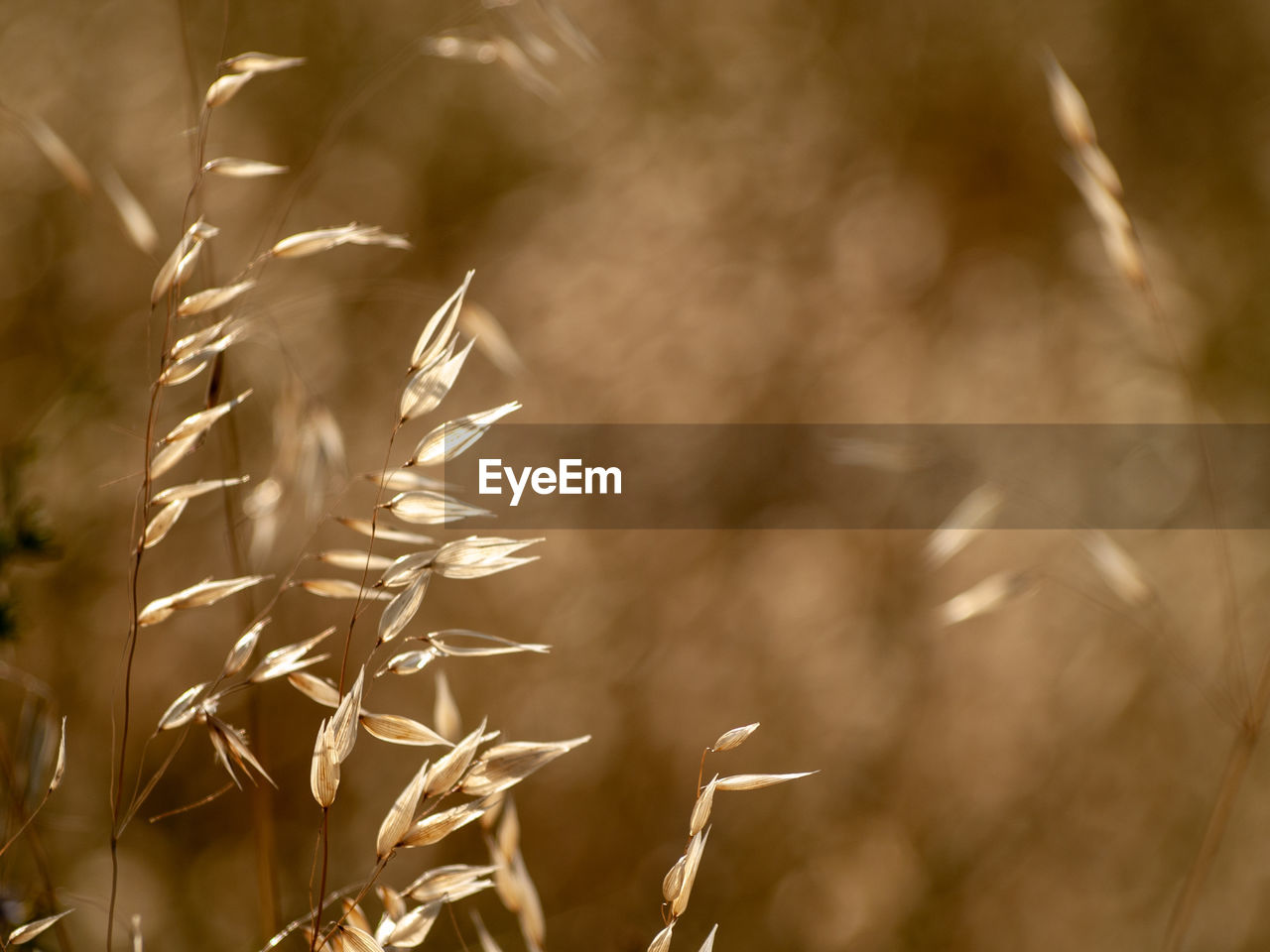 growth, plant, nature, selective focus, no people, day, focus on foreground, close-up, beauty in nature, tranquility, outdoors, vulnerability, field, fragility, sunlight, land, crop, defocused, motion, agriculture, timothy grass