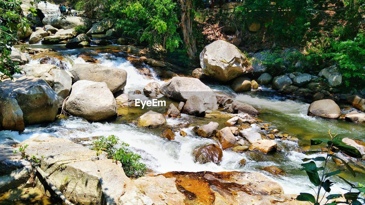 rock, water, rock - object, solid, beauty in nature, nature, flowing water, motion, scenics - nature, no people, day, forest, plant, tree, downloading, tranquility, stone, stream - flowing water, flowing, outdoors, shallow, purity