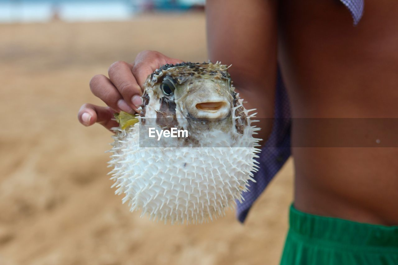 Close-Up Of Boy Holding Blowfish