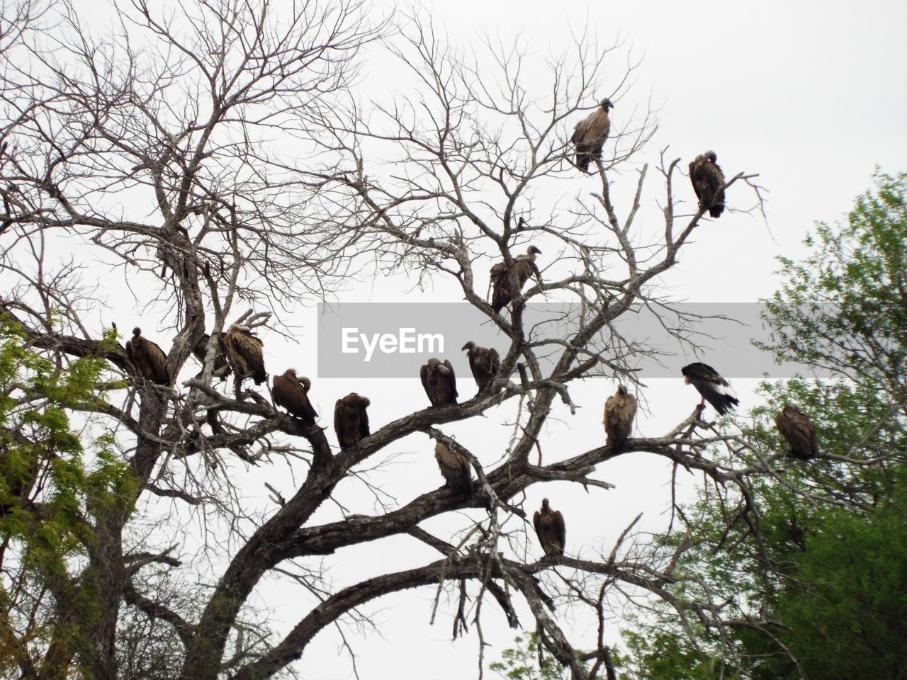 tree, bird, branch, animals in the wild, group of animals, animal themes, animal, vertebrate, animal wildlife, plant, bare tree, low angle view, sky, perching, day, large group of animals, nature, no people, outdoors, flock of birds, animal family