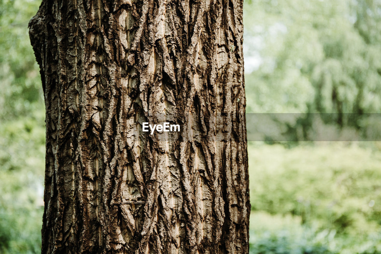 trunk, focus on foreground, tree trunk, tree, plant, close-up, nature, pattern, land, textured, growth, no people, day, natural pattern, plant bark, forest, outdoors, rough, brown, beauty in nature, bark, textured effect, coniferous tree