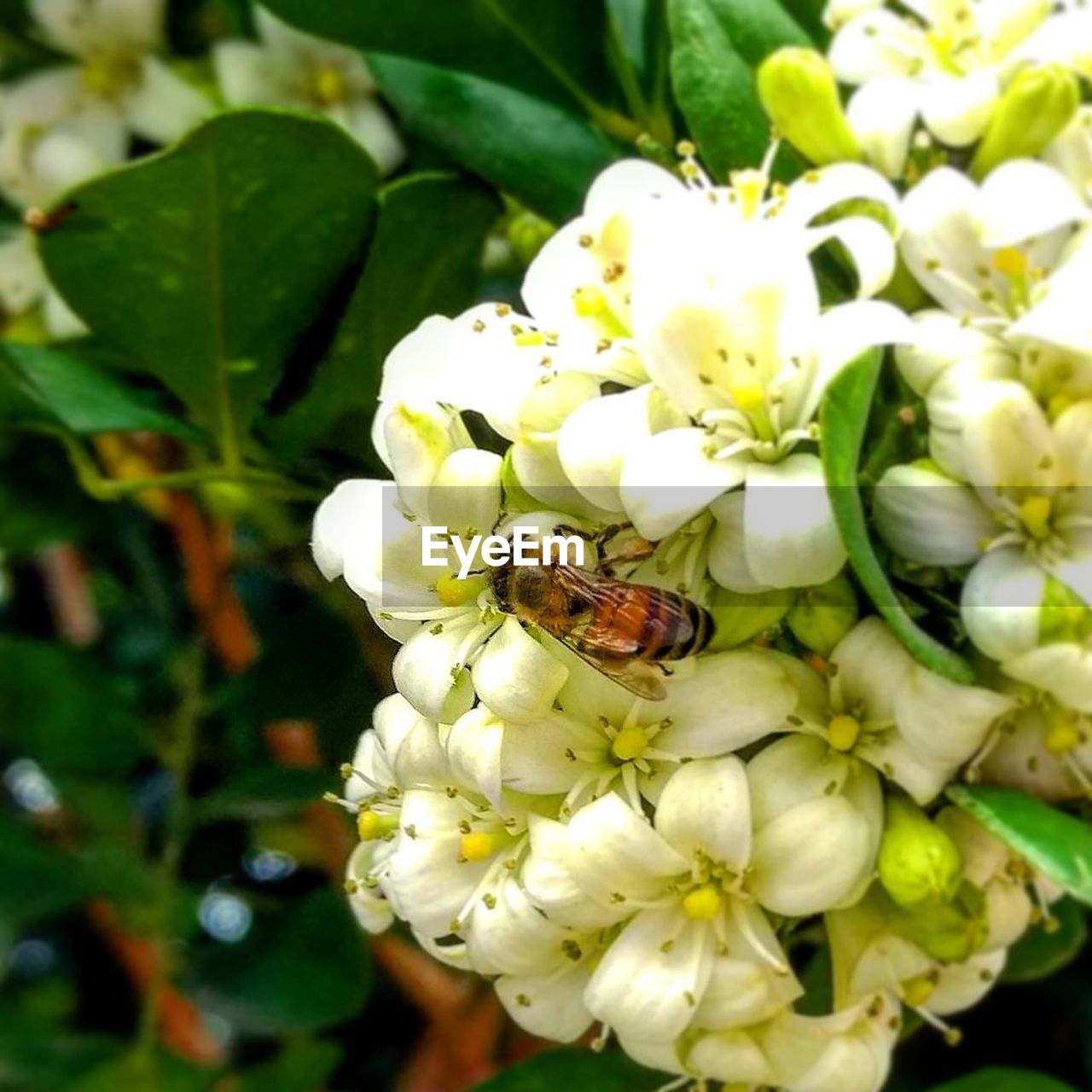 one animal, flower, insect, animal themes, animals in the wild, nature, fragility, growth, plant, petal, wildlife, freshness, beauty in nature, flower head, leaf, day, close-up, outdoors, no people, bee, animal wildlife, pollination