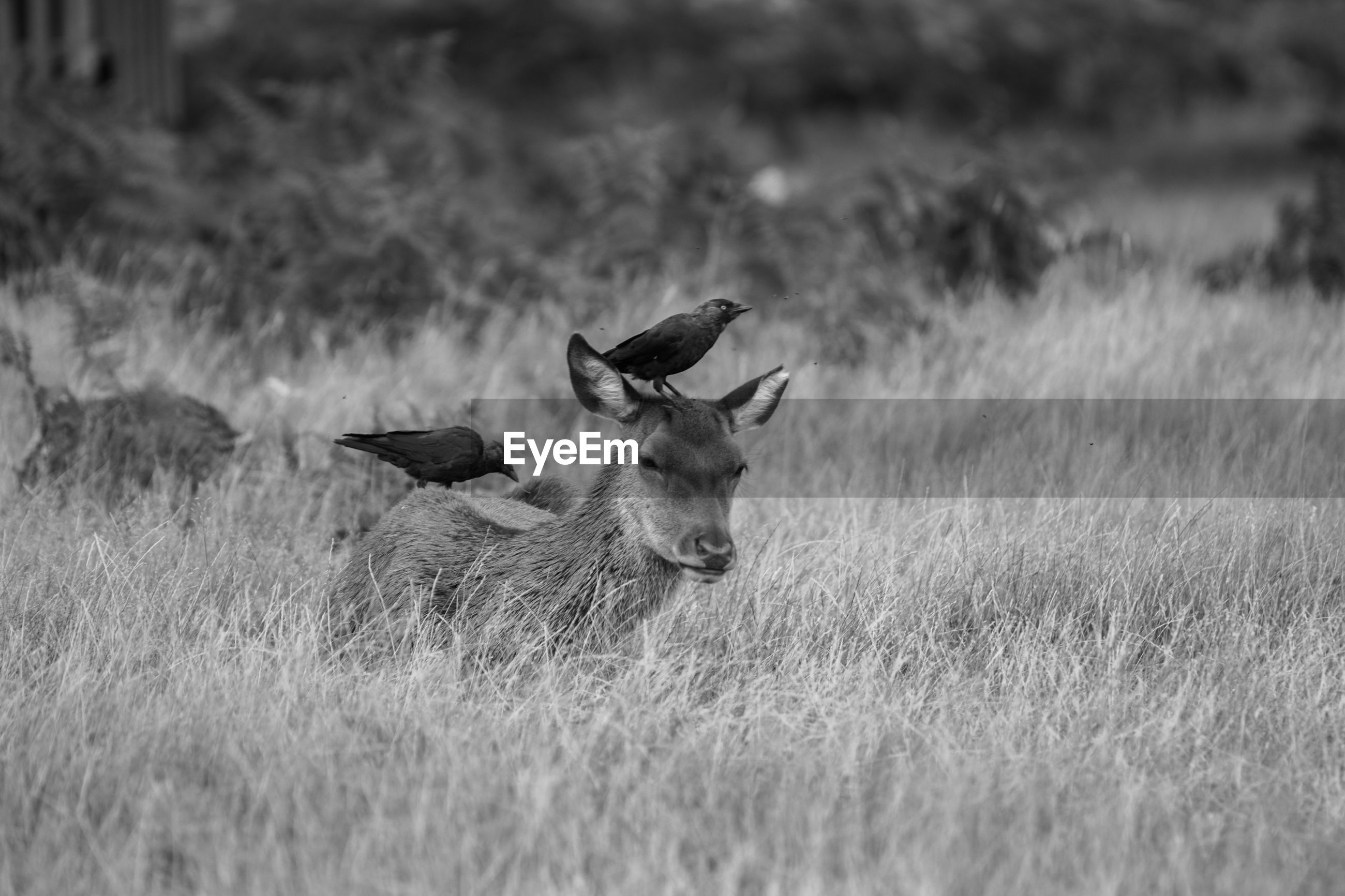 Low angle view of birds perching on deer in field