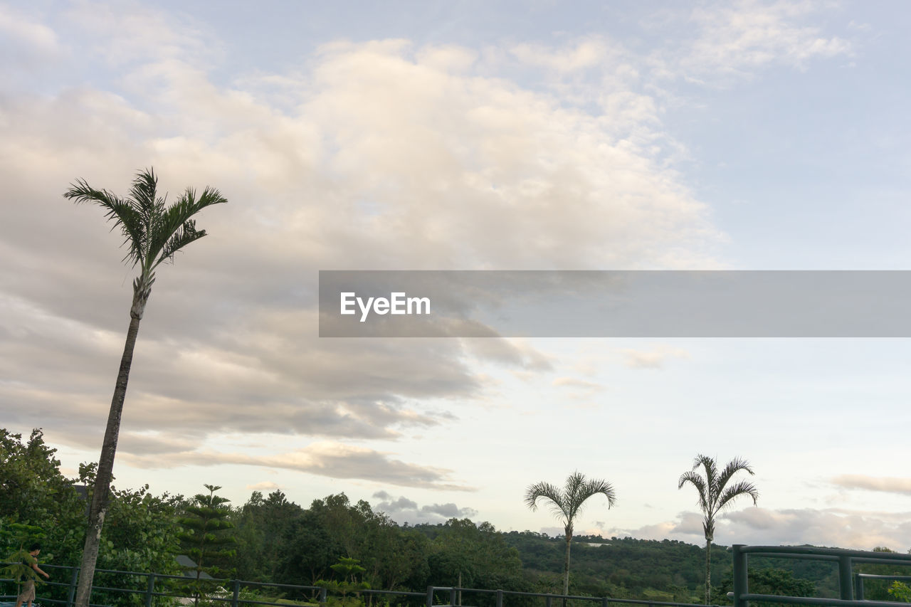 tree, sky, cloud - sky, palm tree, nature, growth, beauty in nature, low angle view, scenics, day, tranquil scene, outdoors, no people, tranquility, tree trunk