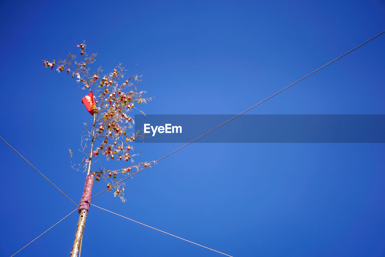 sky, low angle view, blue, clear sky, nature, no people, flower, day, flowering plant, beauty in nature, plant, copy space, growth, fragility, cable, outdoors, sunlight, branch, vulnerability, freshness, power supply