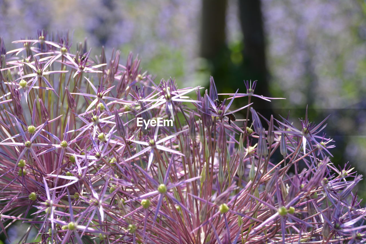 plant, focus on foreground, purple, growth, day, nature, no people, outdoors, close-up, beauty in nature, flower, fragility, freshness, tree