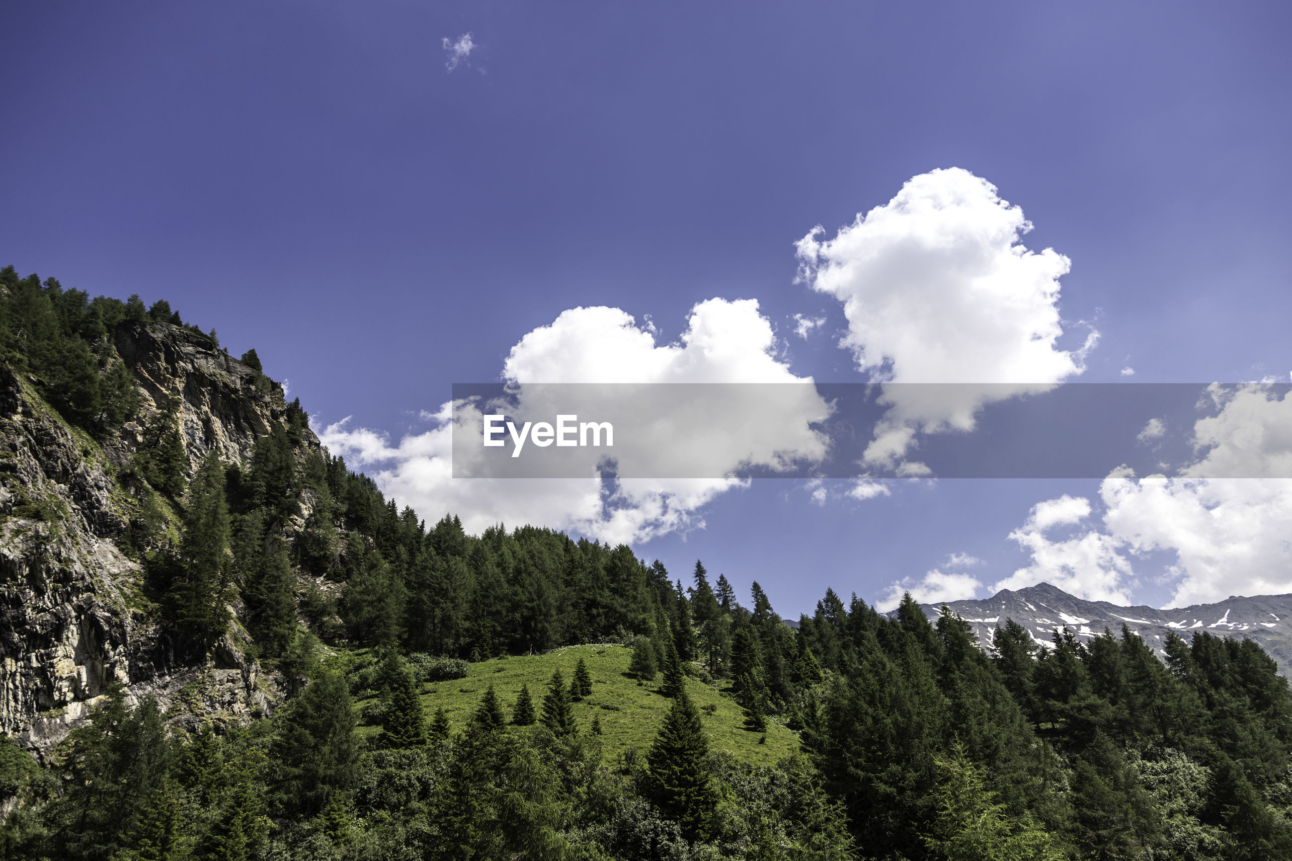 LOW ANGLE VIEW OF TREES AND MOUNTAIN AGAINST SKY