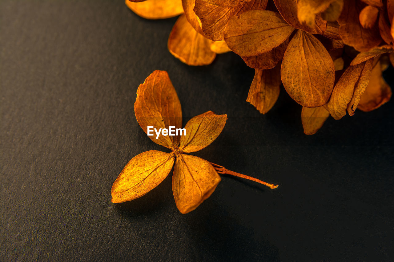 leaf, plant part, close-up, no people, leaves, nature, vulnerability, autumn, fragility, plant, change, freshness, high angle view, beauty in nature, orange color, dry, leaf vein, brown, focus on foreground, still life, natural condition