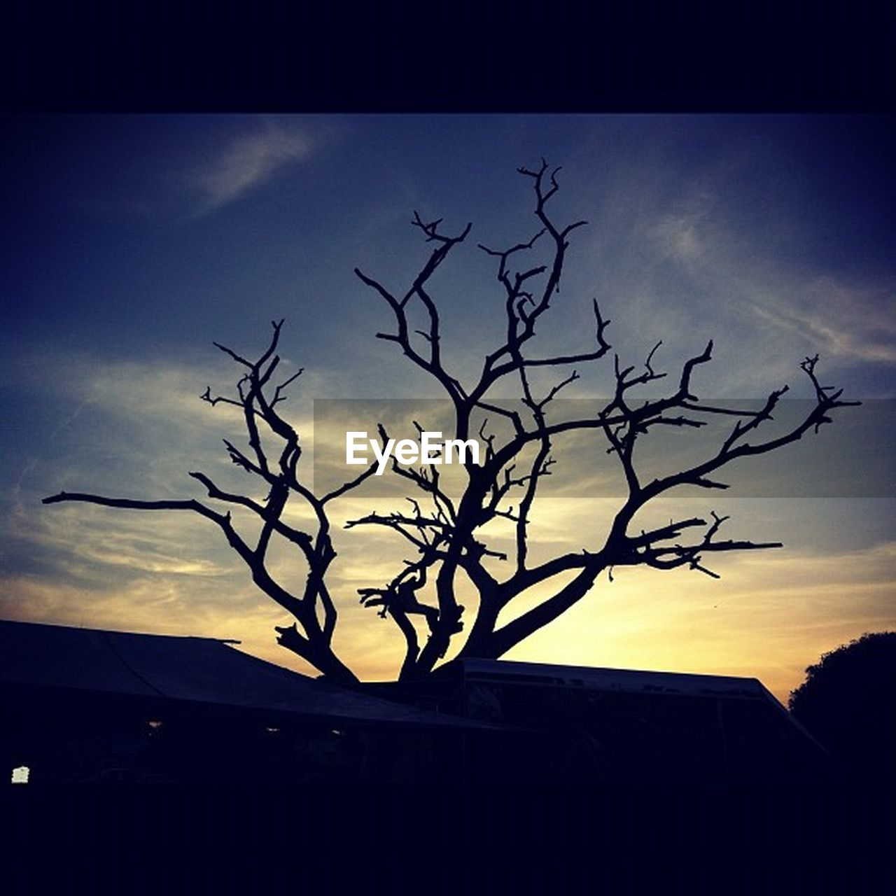 silhouette, sky, no people, nature, sunset, tree, bare tree, outdoors, branch, beauty in nature, day
