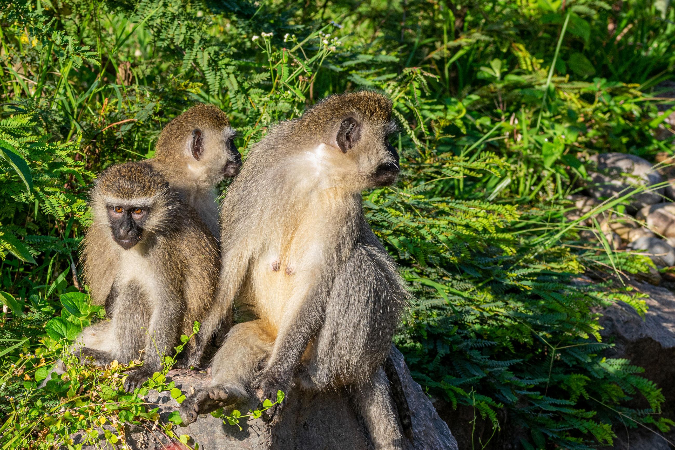 Monkeys sitting in a forest